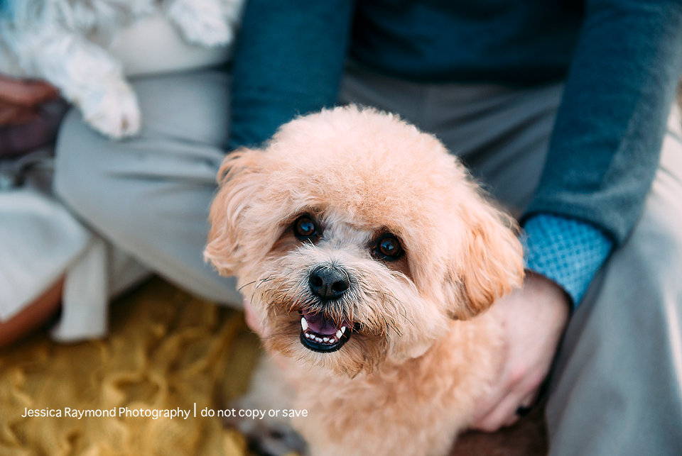 couples photography dog picture
