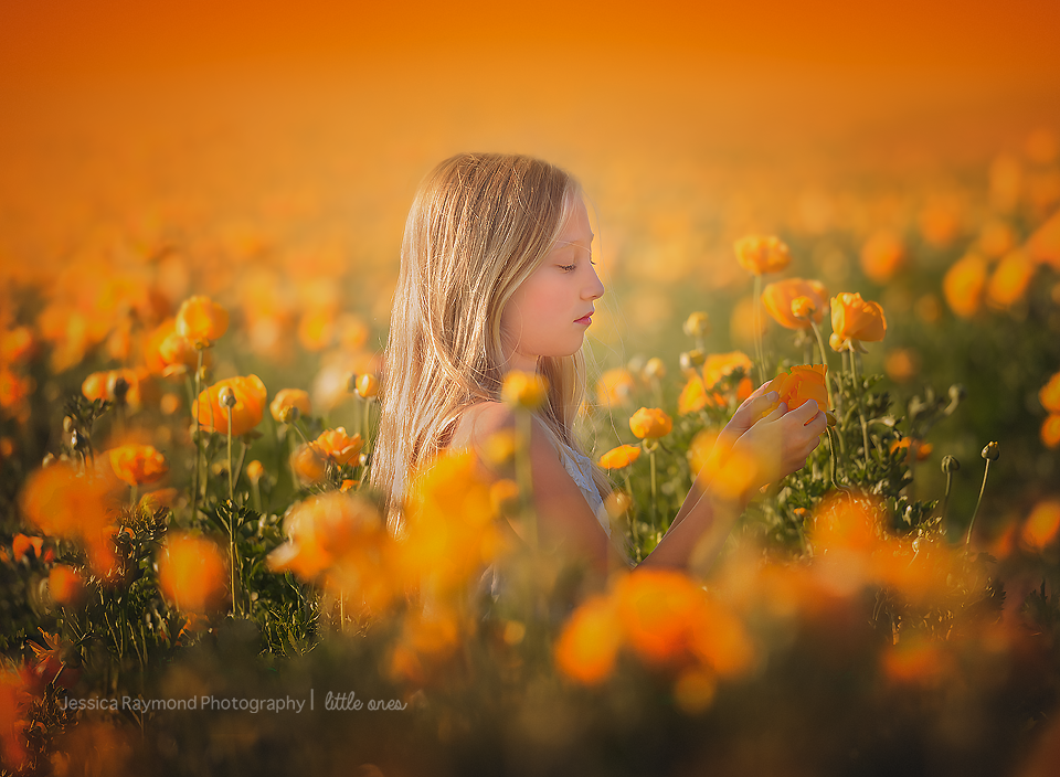 san diego wildflowers flower fields in san diego wildflowers flowers girl in san diego flower field